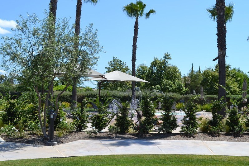 sidewalk with fountains visible past hedges and underneath palms