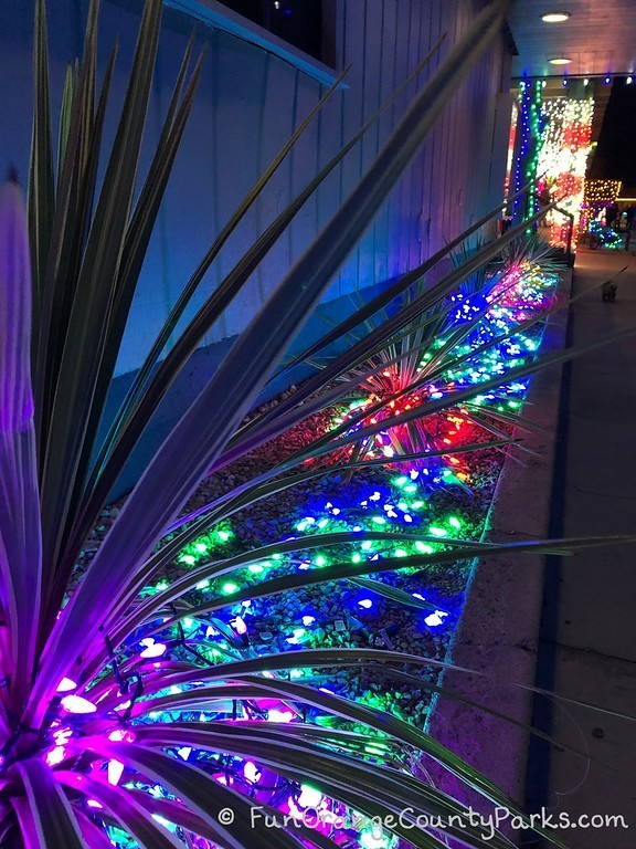 dana point harbor holiday lights in planter bed