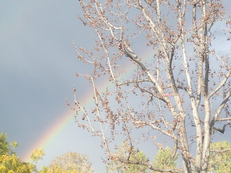 family movies to watch on rainy indoor weekends - rainbow with tree