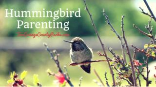 Hummingbird Parenting