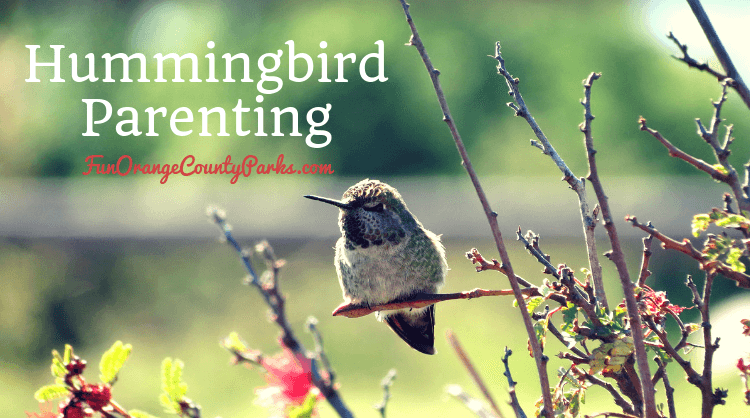 Hummingbird Parenting