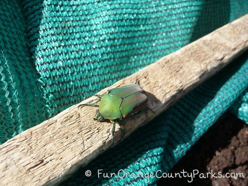richard louv nature books - garden beetle on a piece of wood