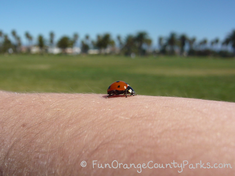richard louv nature books - ladybug on little girl arm