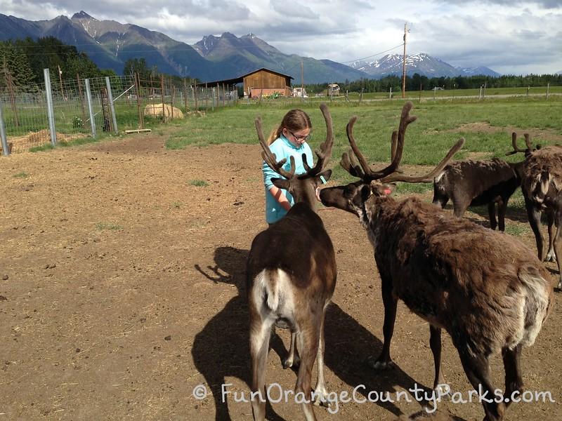 girl feeding reindeer at a farm in Alaska