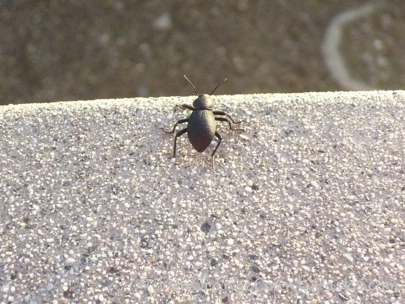 richard louv nature books - stink bug on a curb