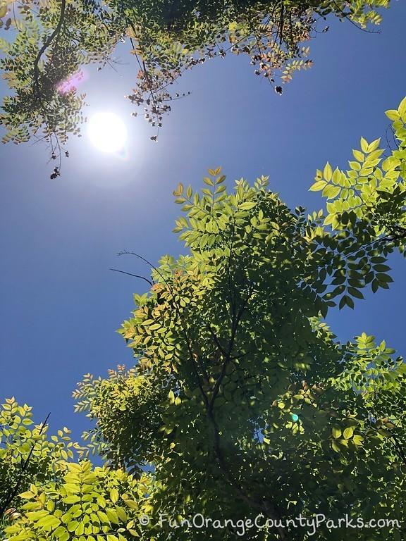 sun shining in blue sky between trees