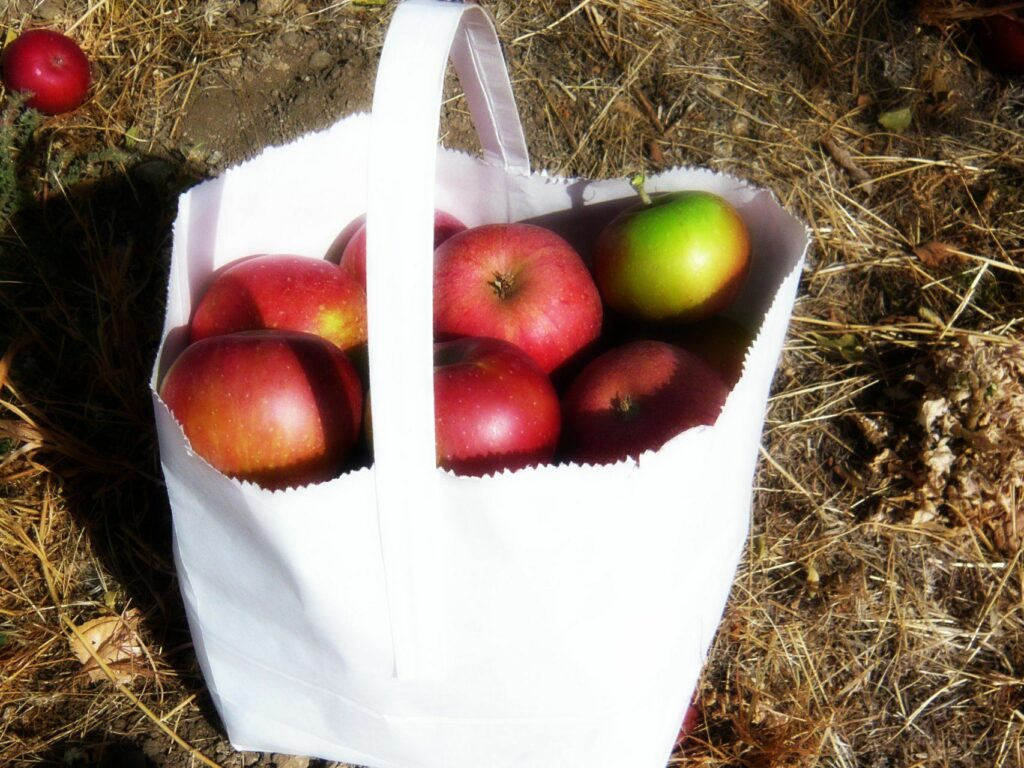 white paper bag with handle filled with fresh apples picked in October