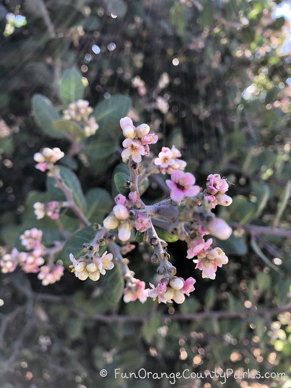 rays of sunshine on a tree branch with pink blossoms at San Diego Botanic Garden