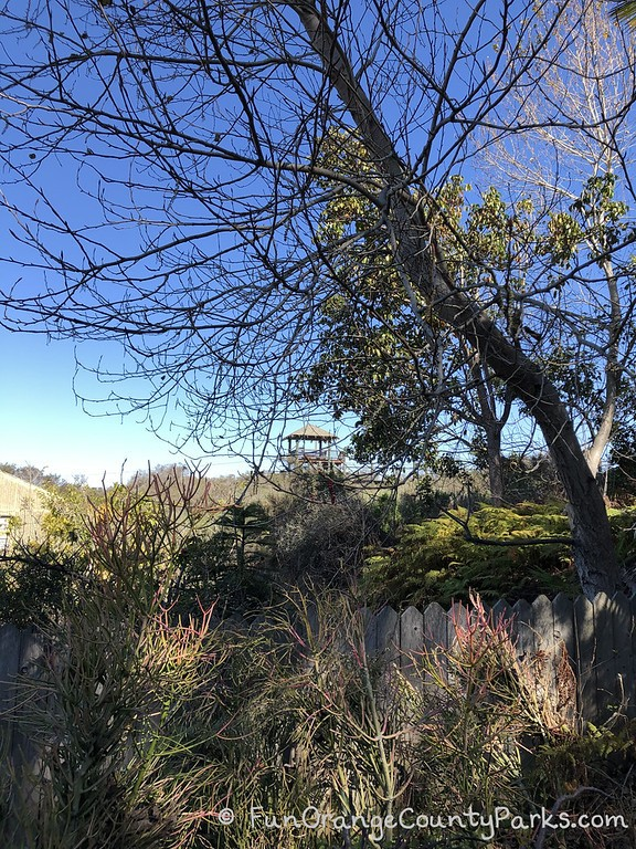 San Diego Botanic Garden overlook through winter trees