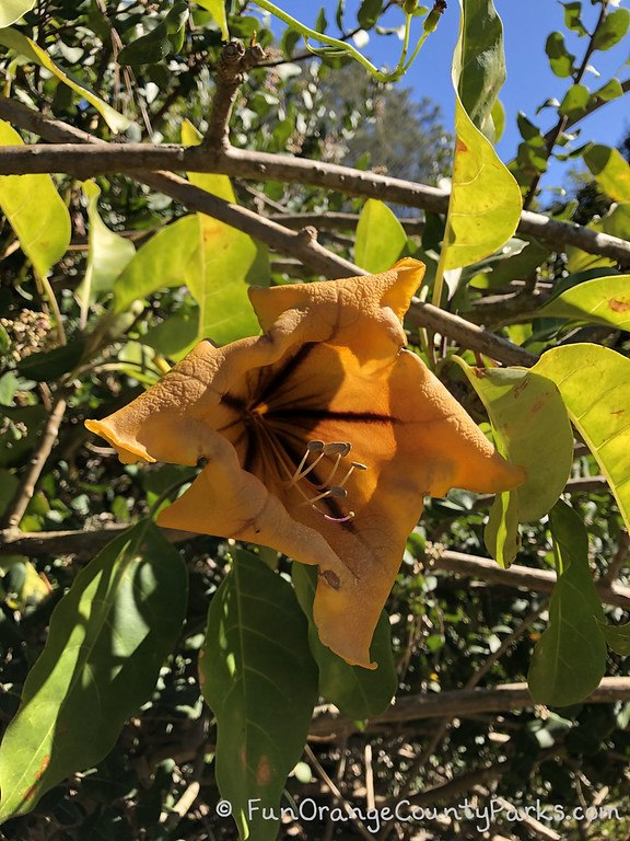 golden flower on a vine with blue sky and leaves in the background