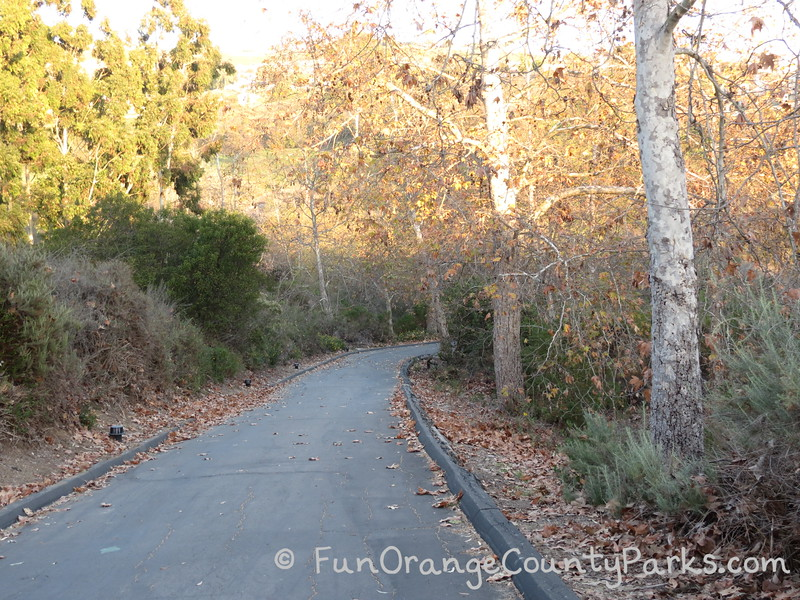 an asphalt paved road with sycamore trees in what looks like fall along the path that leads to Crystal Cove State Park Historic District