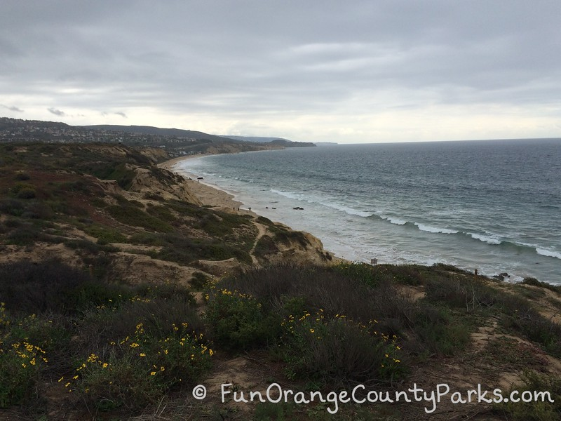 patches of yellow flowers in the foreground with a great expanse of beach and ocean going far in the distance