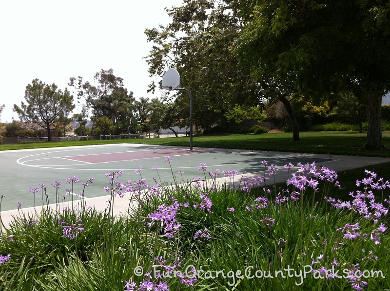 ocean breeze park basketball court with purple society garlic flowers in the foreground